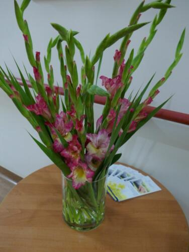 Kwiaty Hospicjum